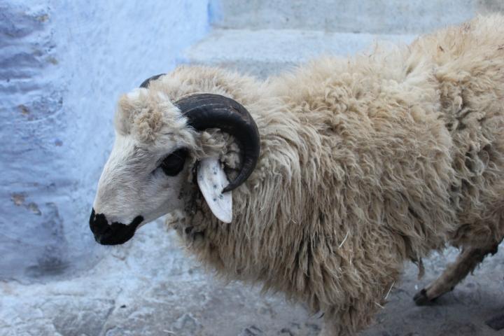 Celebrating Eid Al-Adha inMorocco