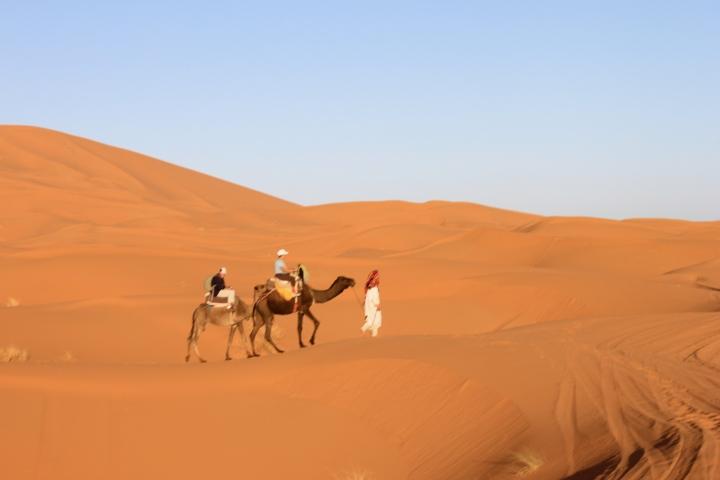 Sand Castles, Golden Dunes & CamelLove