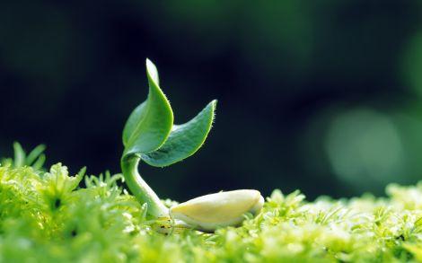 Plants-Grow-Up