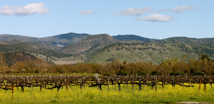 Wine Holiday: A Road Trip Through Napa Valley