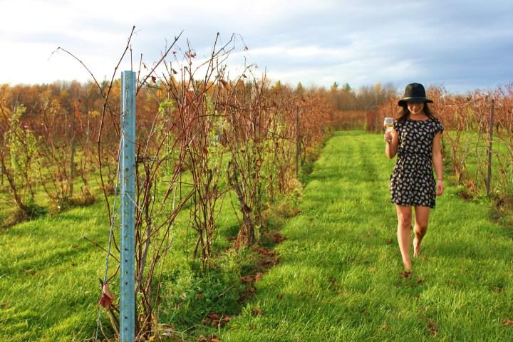 Québec's Wine Route